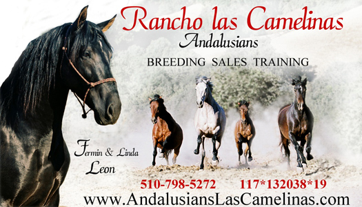 Las Camelinas Andalusians Business Card